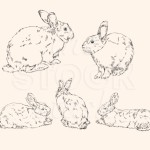 Bunnies illustration originally made for my stock library