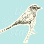 Bird illustration originally made for my stock library